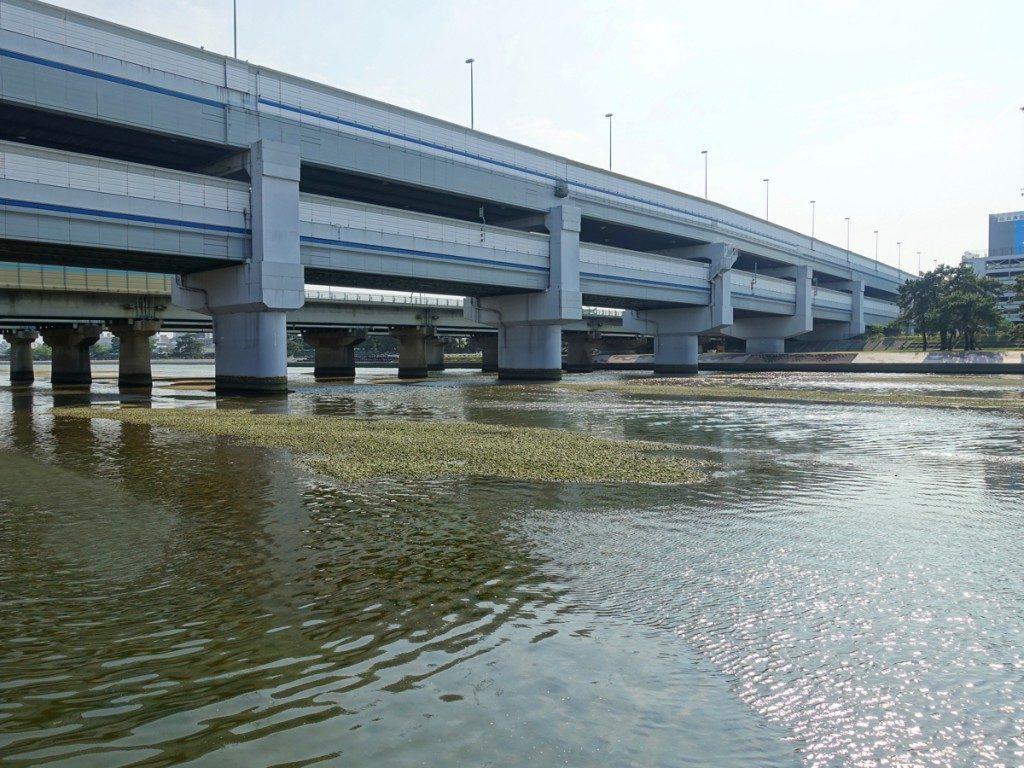 武庫川シーバスポイント 兵庫県西宮市 武庫川43号線周辺 ランカーサイズも狙えるポイント!