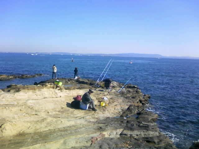 観音崎灯台下 シーバス釣りポイント
