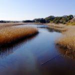 【夷隅川河口】千葉メッキ釣りポイント